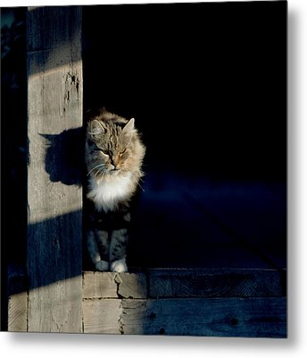 Barn Cat Metal Print by Art Block Collections