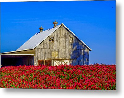 Barn In Red Clover Metal Print by Denise Darby