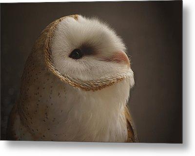 Barn Owl 4 Metal Print by Ernie Echols