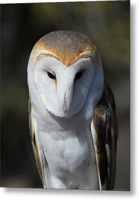 Metal Print featuring the photograph Barn Owl by Avian Resources