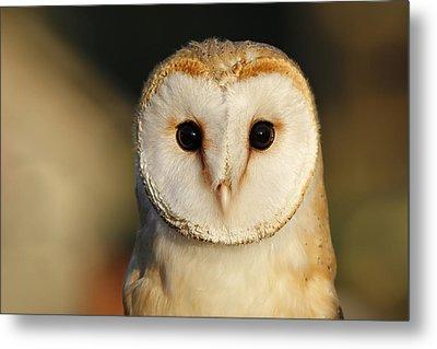 Barn Owl Beauty Metal Print by Roeselien Raimond
