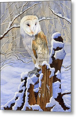 Barn Owl In Snow Metal Print by Anthony Forster