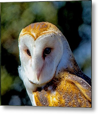 Metal Print featuring the photograph Barn Owl Portrait by Constantine Gregory
