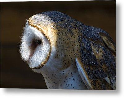 Barn Owl Profile Metal Print