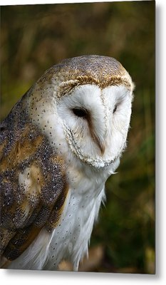 Barn Owl Metal Print by Scott Carruthers