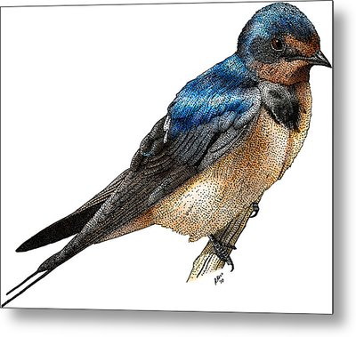 Barn Swallow Metal Print by Roger Hall