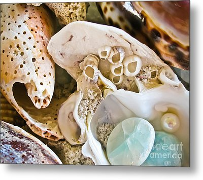 Barnacles And Shells Metal Print by Colleen Kammerer