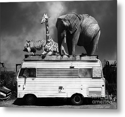 Barnum And Bailey Goes On A Road Trip 5d22705 Black And White Metal Print by Wingsdomain Art and Photography