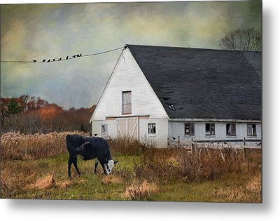 Barnyard Bliss Metal Print by Robin-Lee Vieira