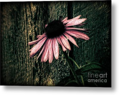 Metal Print featuring the photograph Barnyard Coneflower by Marjorie Imbeau