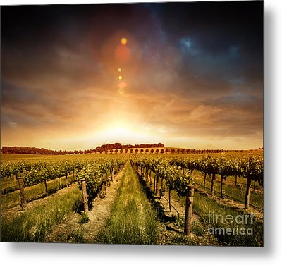 Metal Print featuring the photograph Barossa Vineyard by Boon Mee