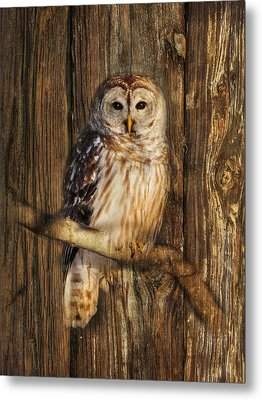 Barred Owl 1 Metal Print by Lori Deiter