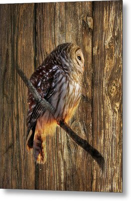 Barred Owl 2 Metal Print by Lori Deiter