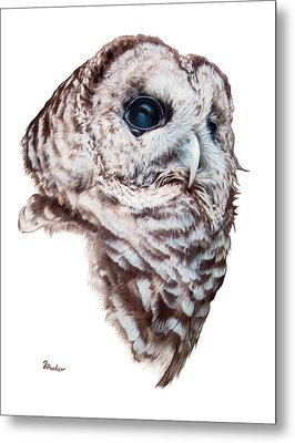 Metal Print featuring the drawing Barred Owl by Brent Ander