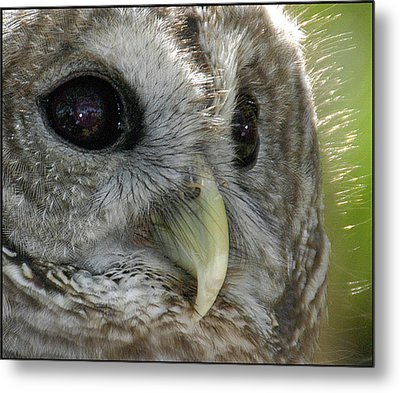 Metal Print featuring the photograph Barred Owl  by Geraldine Alexander
