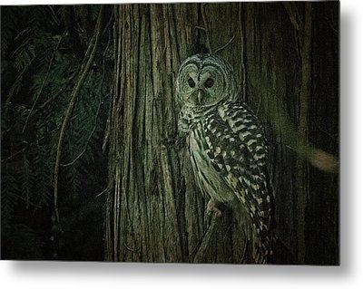 Barred Owl Metal Print by R J Ruppenthal