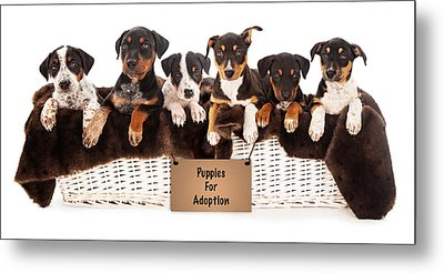 Basket Of Mixed Breed Puppies Metal Print by Susan Schmitz
