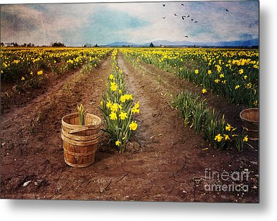 Metal Print featuring the photograph basket with Daffodils by Sylvia Cook