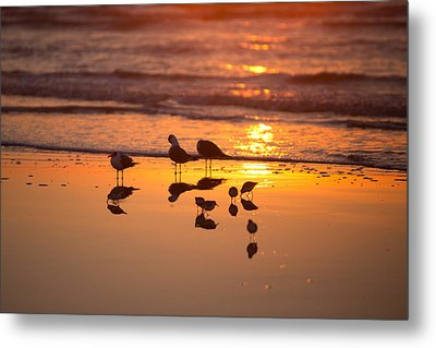 Basking In Sunshine Metal Print