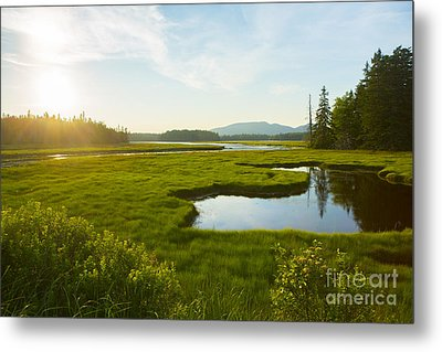 Bass Harbor Marsh At Dusk Metal Print by Diane Diederich