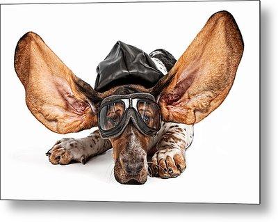 Basset Hound Dog Aviator Metal Print