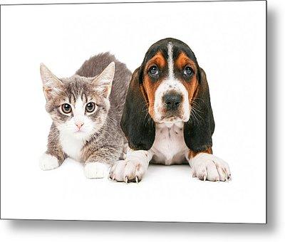 Basset Hound Puppy And Kitten Metal Print