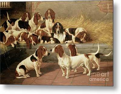 Basset Hounds In A Kennel Metal Print