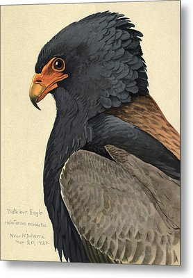 Bateleur Eagle Metal Print by Rob Dreyer