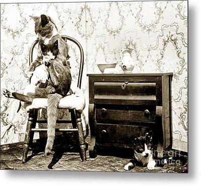 Metal Print featuring the photograph Bath Time For Kitty Circa 1900 Historical Photos by California Views Mr Pat Hathaway Archives
