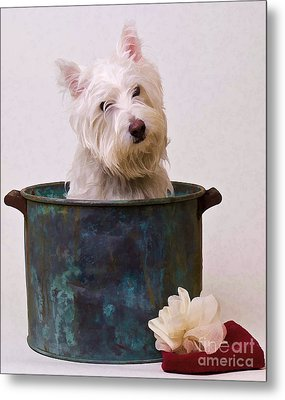 Bath Time Westie Metal Print by Edward Fielding