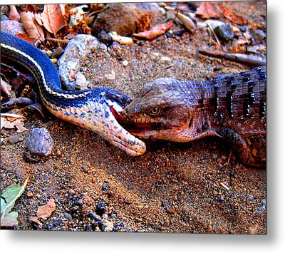 Battle Of The Reptiles Metal Print by Catherine Natalia  Roche