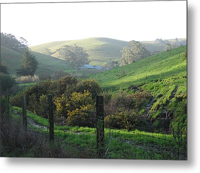 Bay Hill Road Metal Print