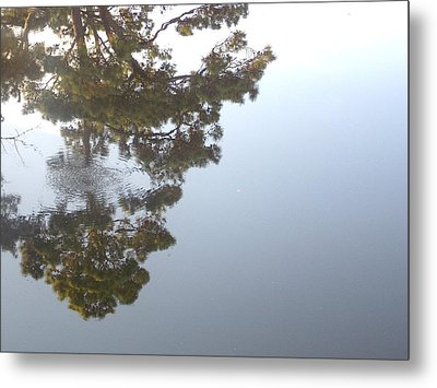 Bayou Bubbles Metal Print by John Glass