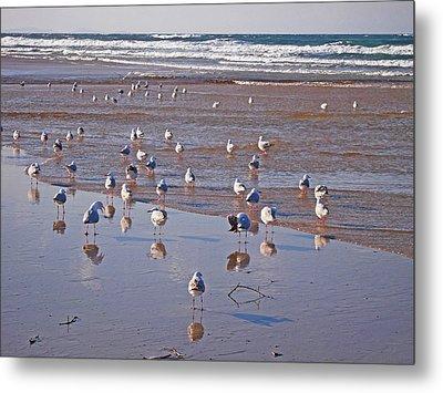 Metal Print featuring the photograph Beach Birds 4 by Ankya Klay
