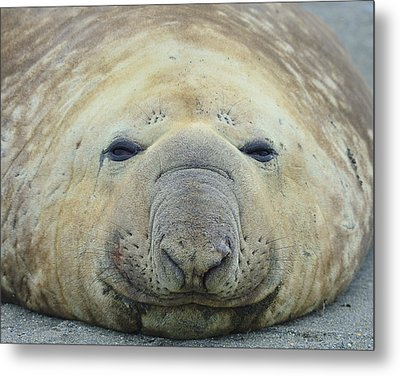 Beach Bum Metal Print by Tony Beck