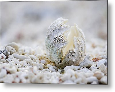 Beach Clam Metal Print by Sean Davey