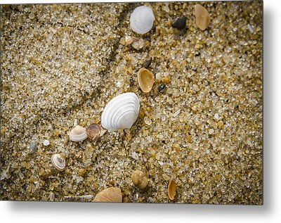 Beach Debris Metal Print by Bradley Clay