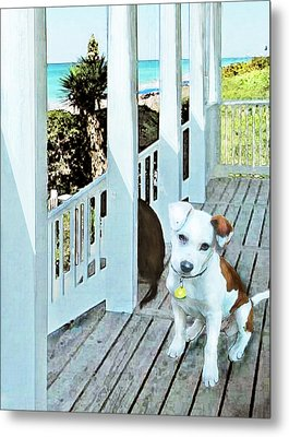 Beach Dog 1 Metal Print by Jane Schnetlage