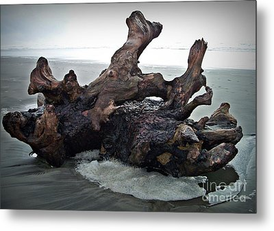 Beach Driftwood In Color Metal Print