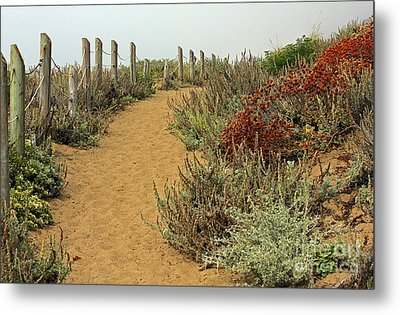 Metal Print featuring the photograph Beach Dune  by Kate Brown