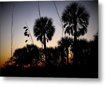 Beach Foliage At Sunset Metal Print by Phil Penne