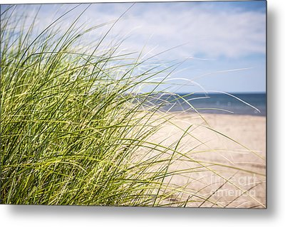 Beach Grass Metal Print by Elena Elisseeva