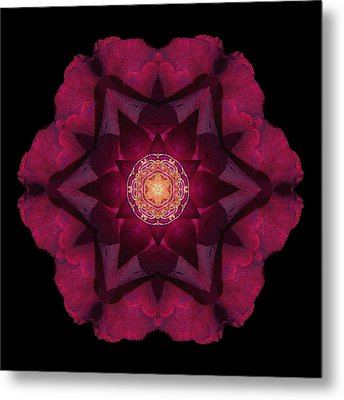 Beach Rose I Flower Mandala Metal Print by David J Bookbinder