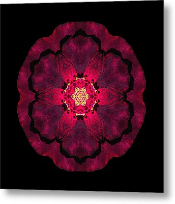 Beach Rose II Flower Mandala Metal Print by David J Bookbinder