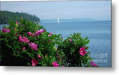 Beach Roses Metal Print by Christopher Mace