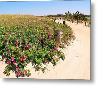 Metal Print featuring the photograph Beach Roses by Janice Drew