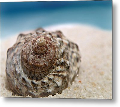 Metal Print featuring the photograph Beach Treasure by Micki Findlay