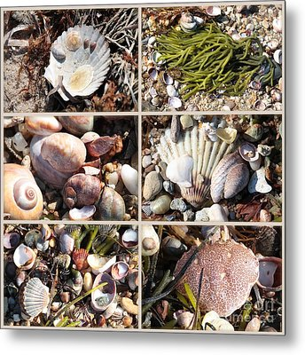 Beach Treasures Metal Print by Carol Groenen