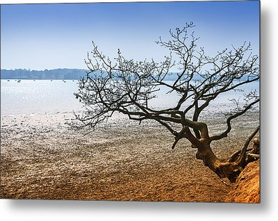 Beach Tree Metal Print by Svetlana Sewell