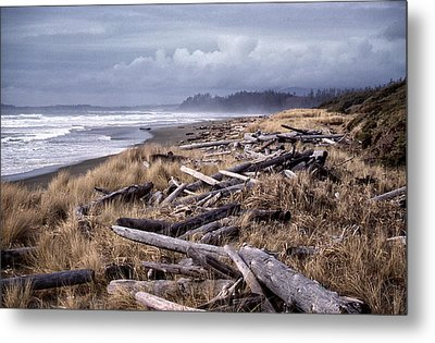 Beached Driftlogs Metal Print